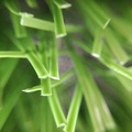 Cỏ sân bóng VFA381380D2